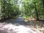 Schwanheimer Wald: Waldweg