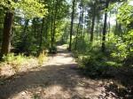 Schwanheimer Wald: Waldweg II