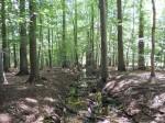 Schwanheimer Wald: Reißender Fluß