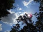 Schwanheimer Wald: Auf zur Sonne